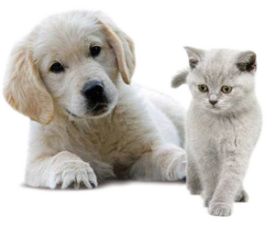 chiens-chats transparent